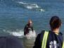 2017 Alcatraz Sharkfest